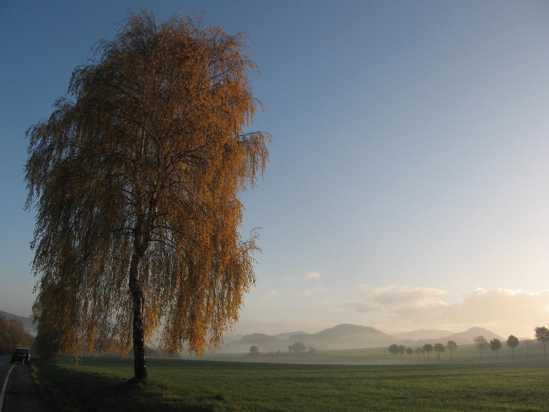 Novemberglanz und Bleiche