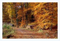 Novembergold im Wald