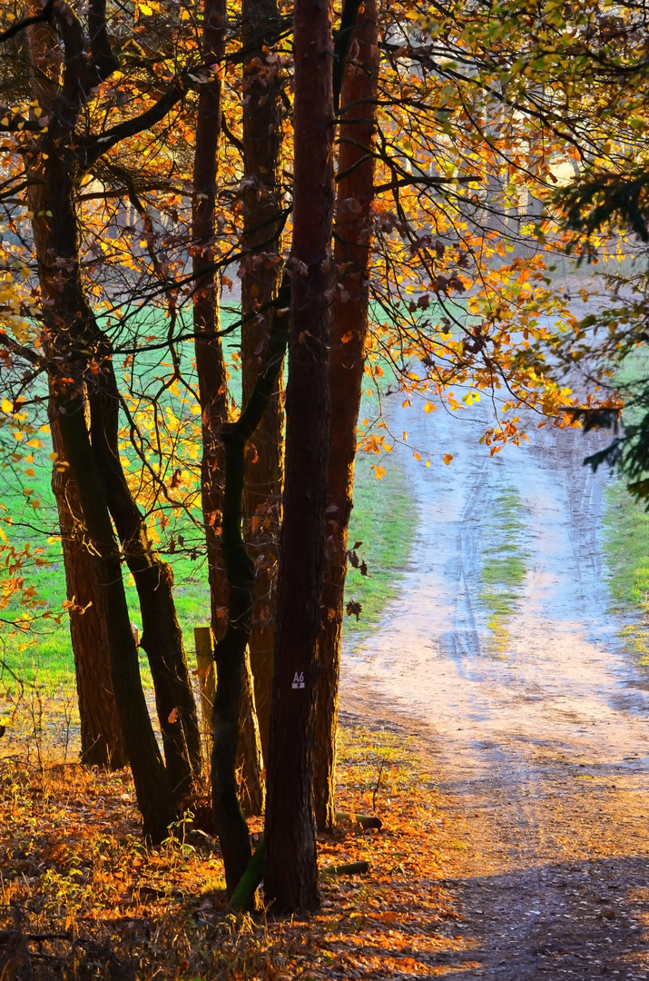 Novemberlandschaft