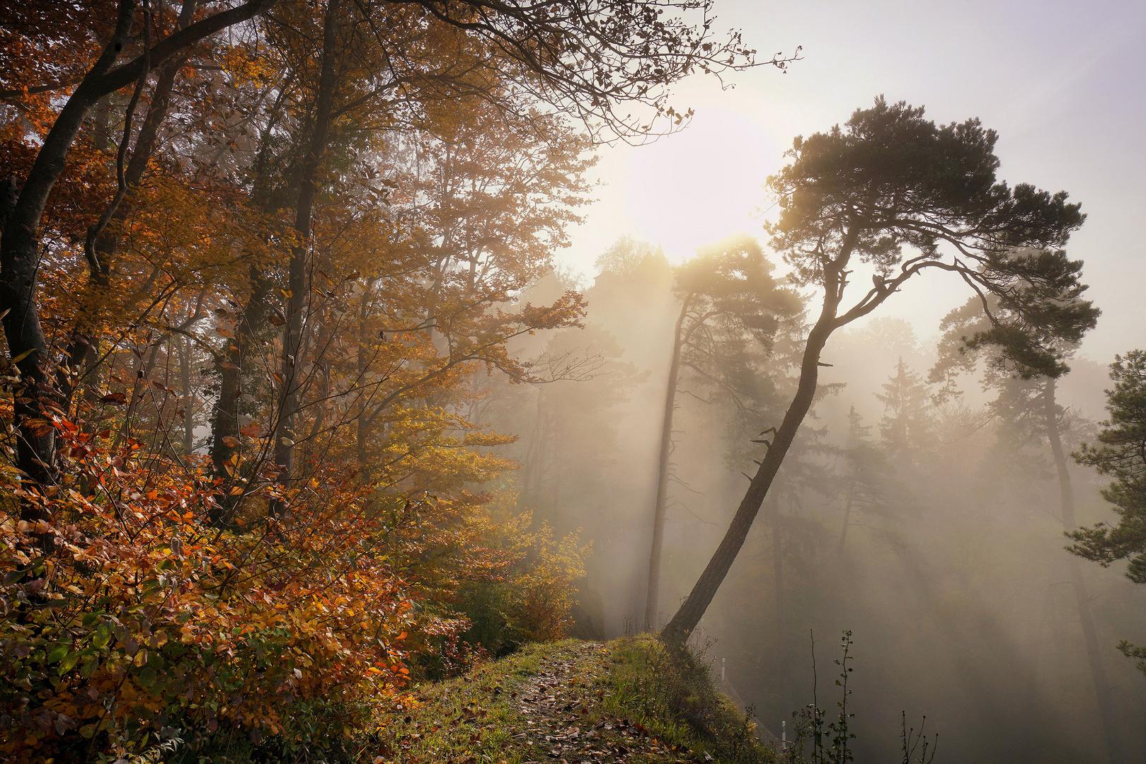 Novemberlicht im Herbstwald 1