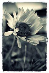 novembermittwochsblümchen