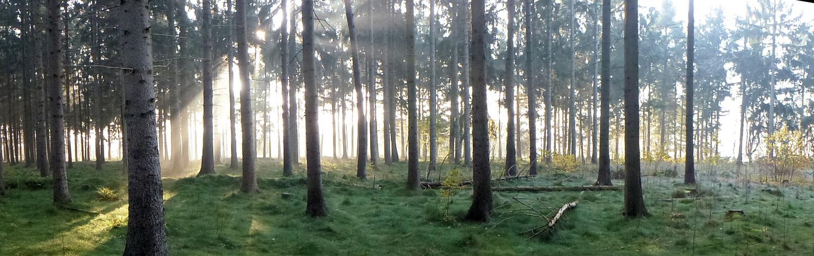 Novembermorgenstimmung im Wald
