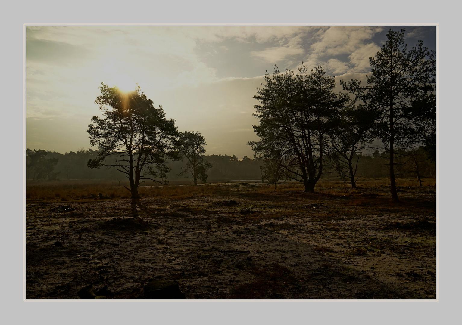 Novembersonne in der Heide