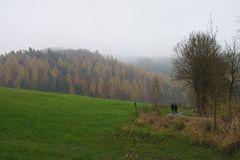 Novemberstimmung im Wildecker Forst (Hessen)