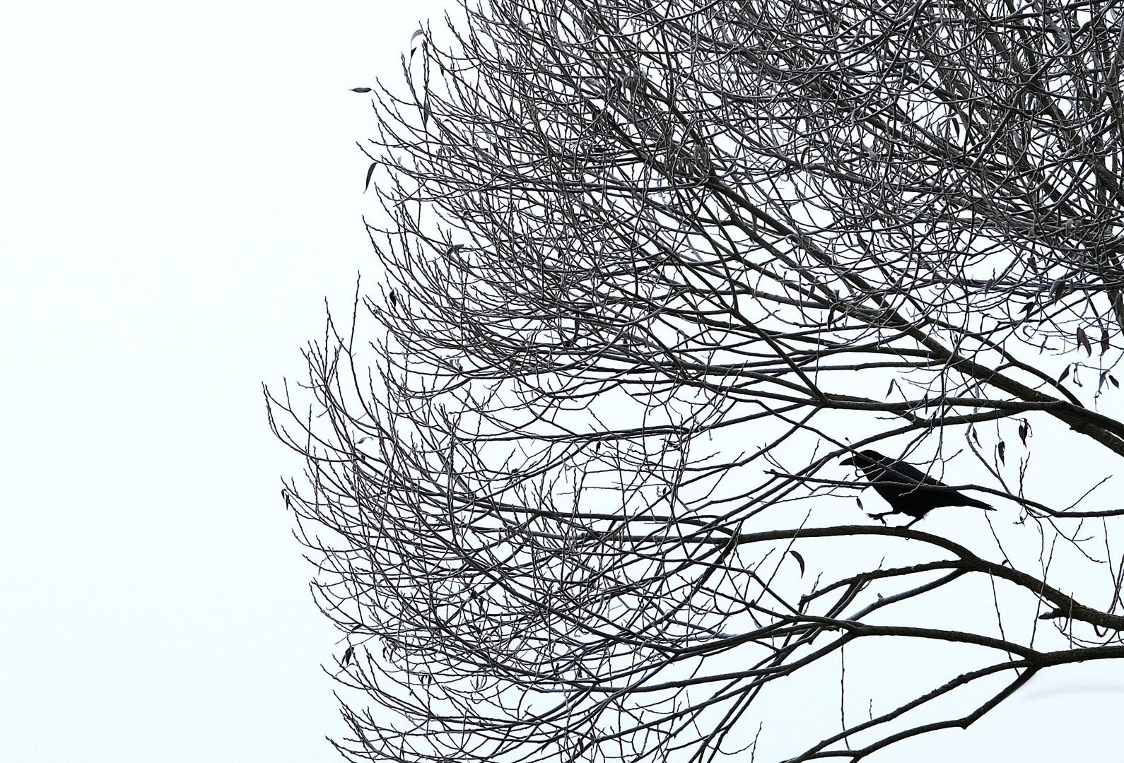 Novembervogel