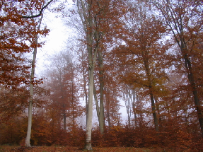 Novemberwald