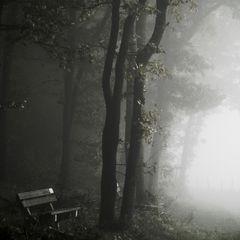 Novemberwald im Nebel