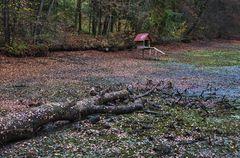 Novemberwetter am abgefischten Greither Fischteich! (2)
