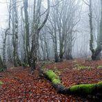 Novembre dans les Vosges   ....