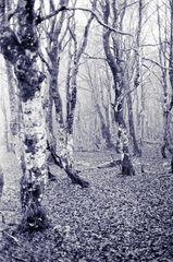 Novembre dans les Vosges II ....