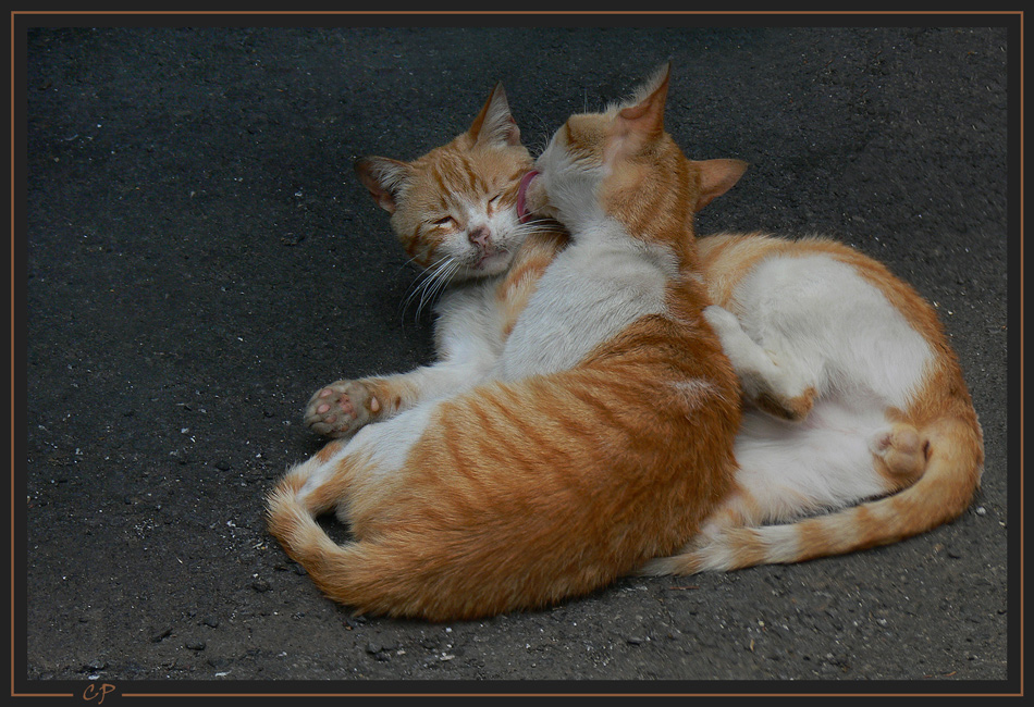 Nr.3 - Romeo und Julia...