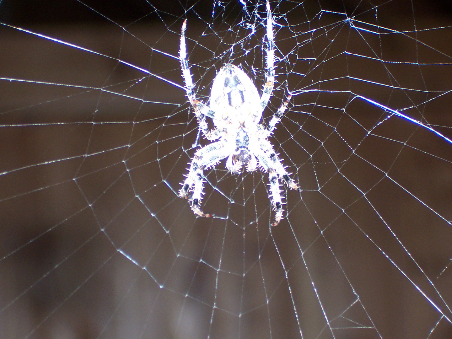 nuclear spider