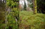 Nürnberger Reichswald im Dezember Bild2
