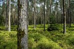 Nürnberger Reichswald im Frühling