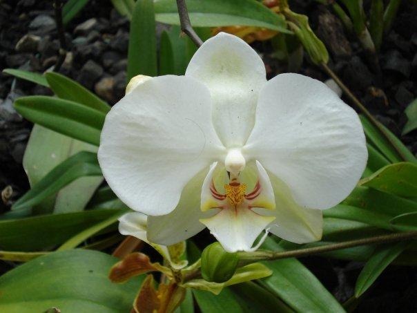 """nuestra flor nacional """"la orquidea"""""""