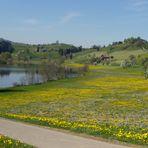 Nuestros 3 estanques / Nos 3 étangs / Unsere 3 Teiche...2.03
