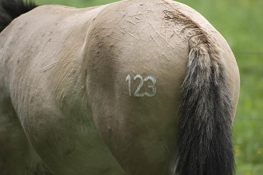 Nummer 123