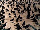 nun ja: die Tauben auf dem Markusplatz