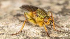 Nun, kleine Fliege?