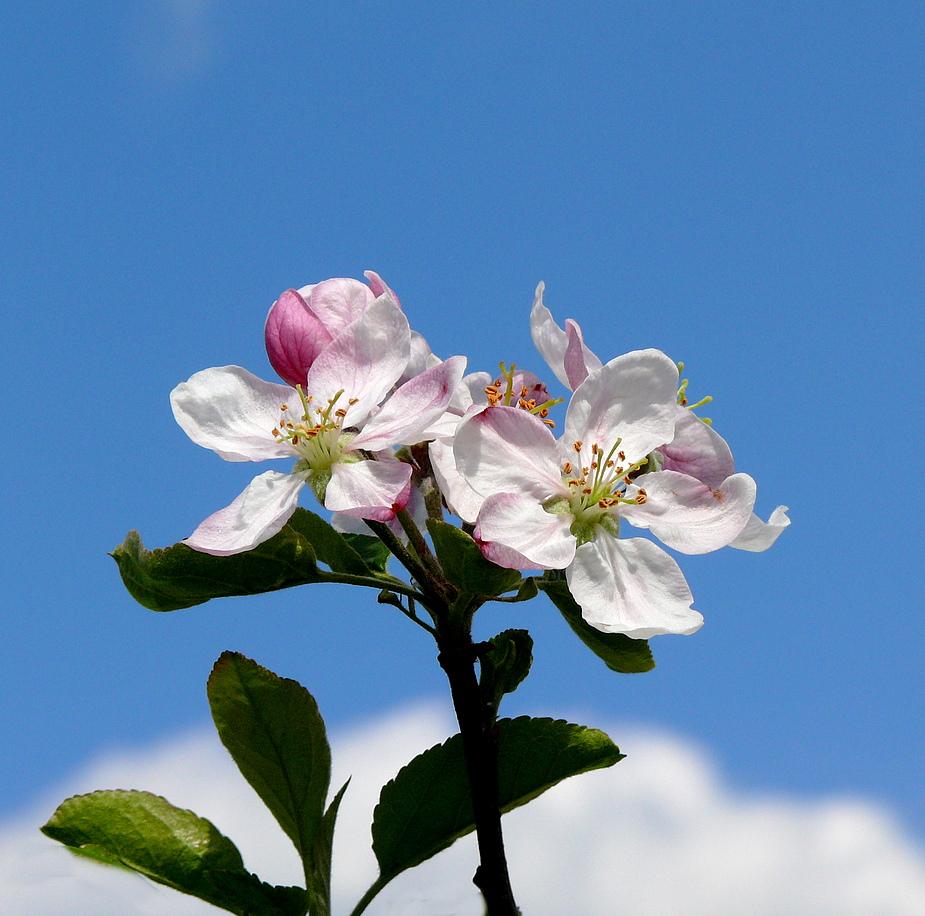 Nun steht in Laub und Blüte, Gott Schöpfer, deine Welt