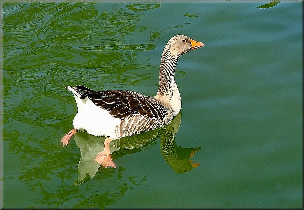 nuota libero, ricordando Maria Grazia Nustri nel loro compleanno.