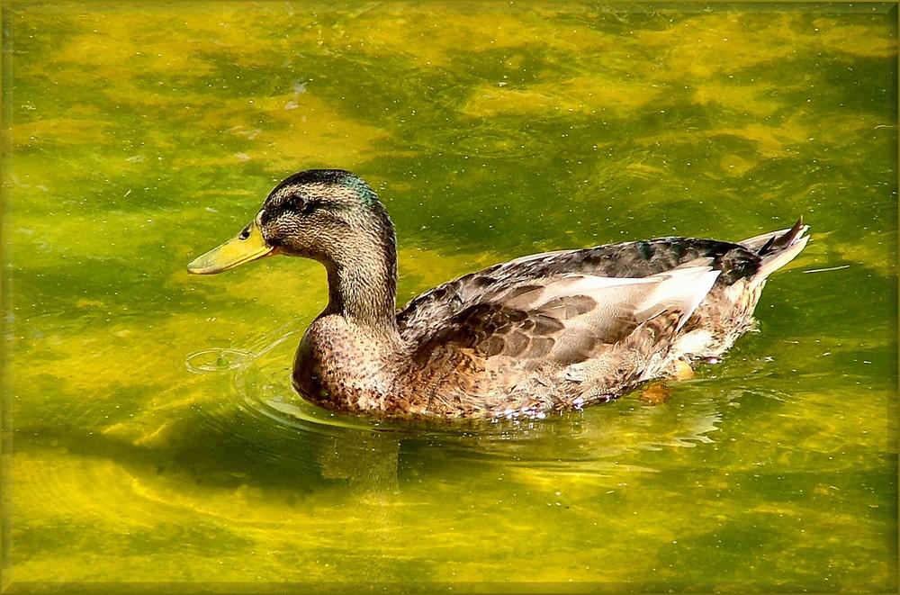 Nuoto al lago..