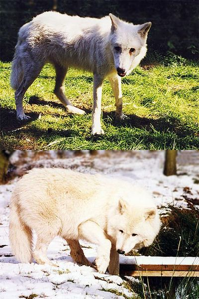 Nur 6 Monate trennt die beide Bilder.