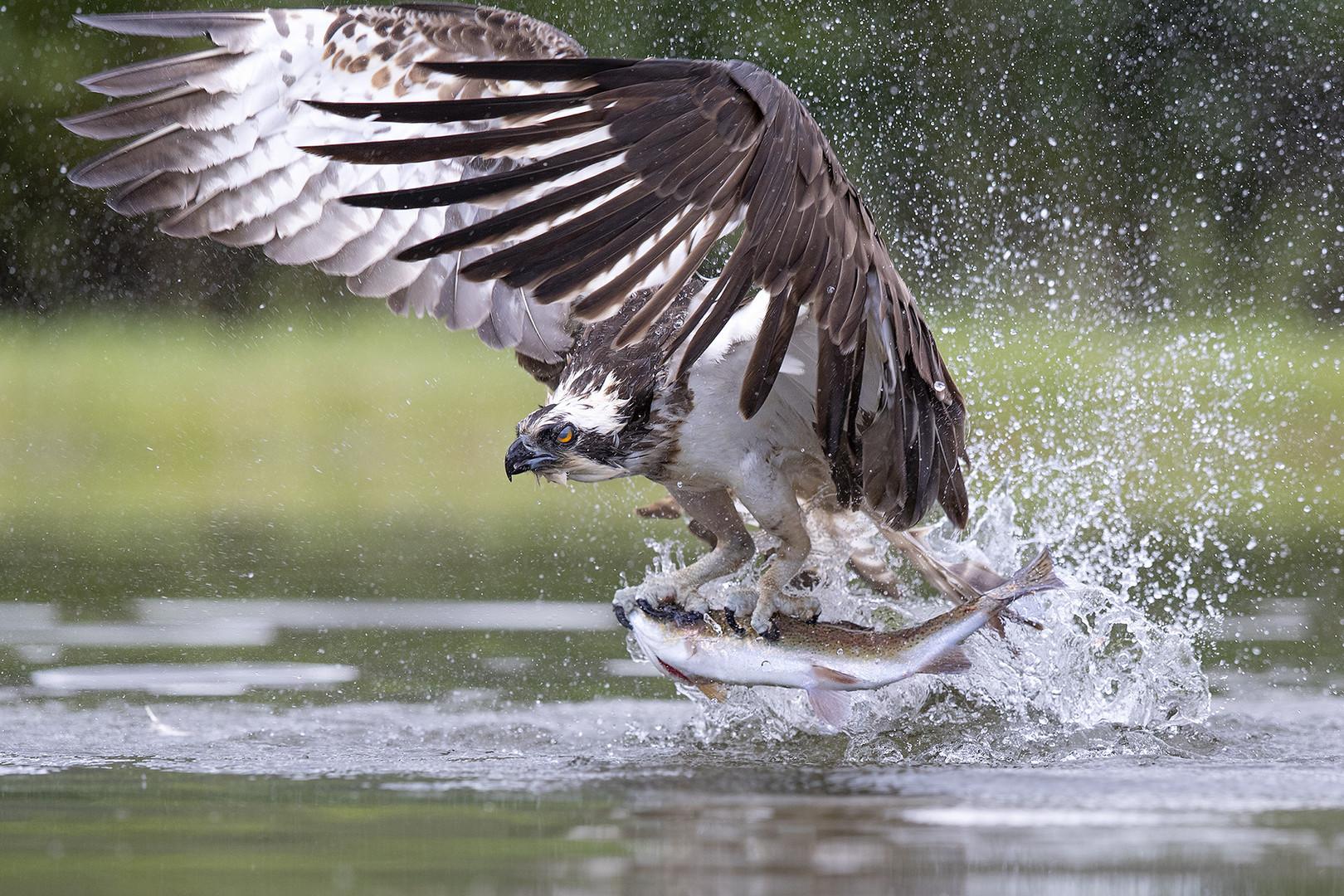 Vögel Fangen