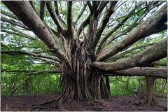 Nur ein Baum (1)