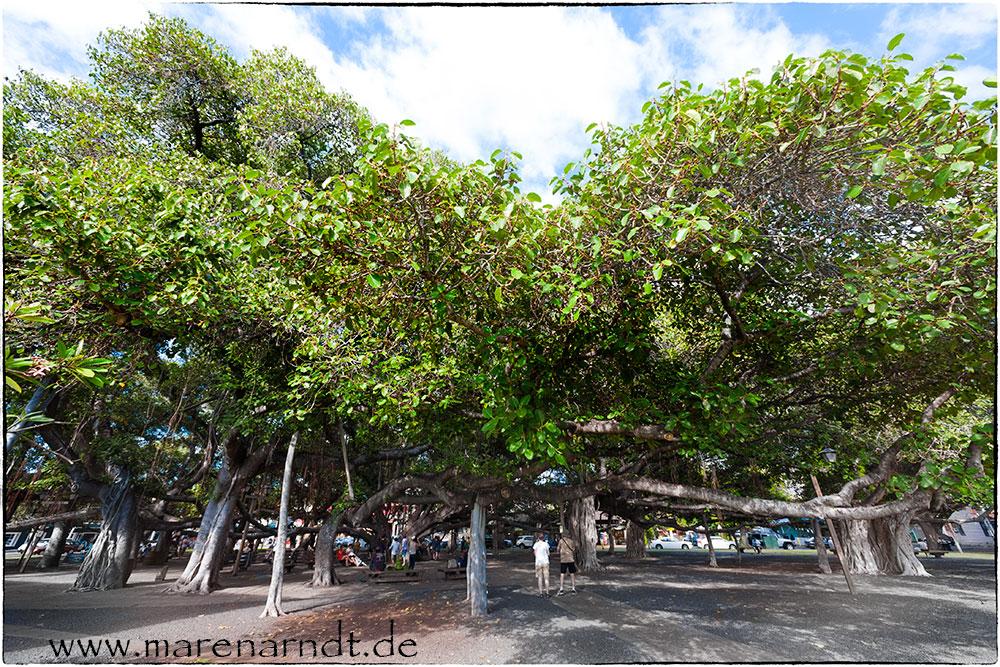 Nur ein Baum (2)