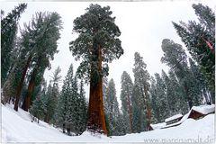 Nur ein Baum (3) ...