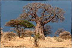 Nur ein Baum (4)