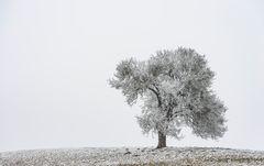nur ein Baum