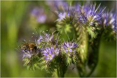 nur ein Bienchen