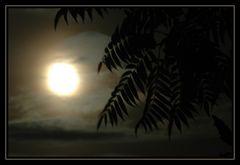 nur ein Hauch Karibik - beim Mondschein - in der Altmark