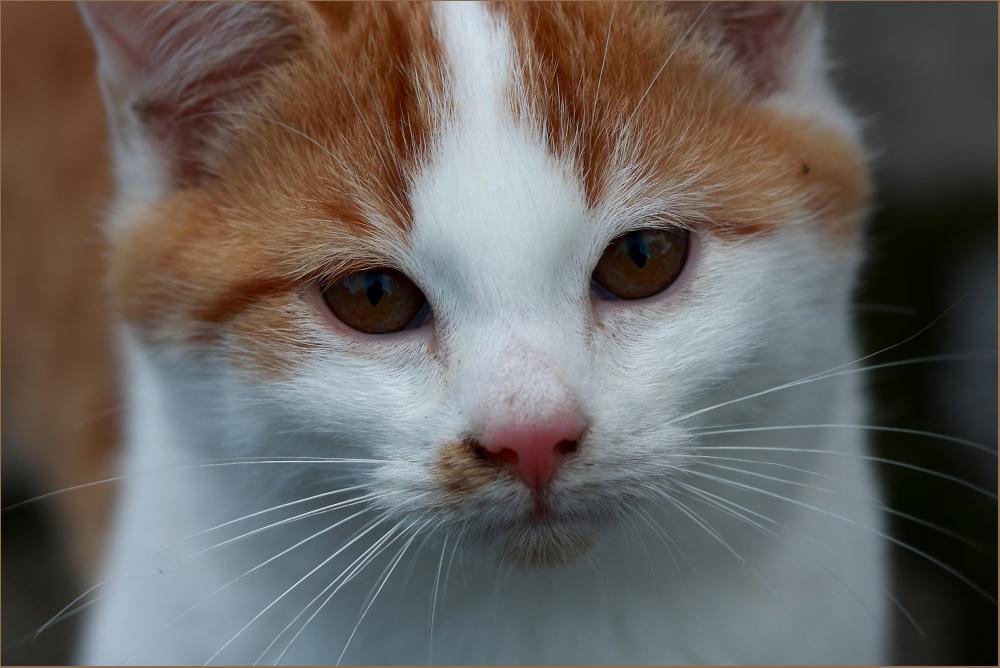Nur ein Kätzchen