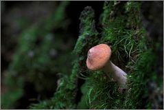 Nur ein kleiner Pilz...