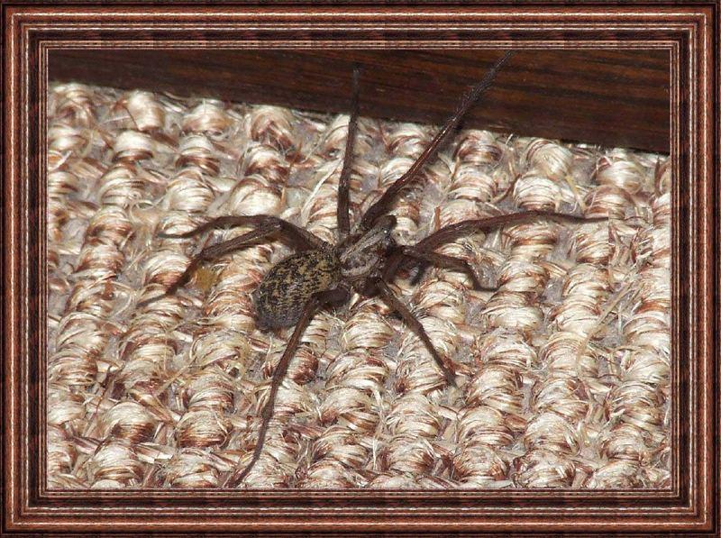 nur ein kleines Spinnchen
