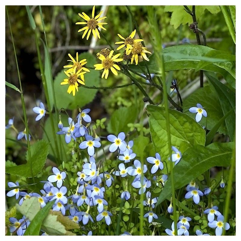 Nur ein paar Wildblümchen ....