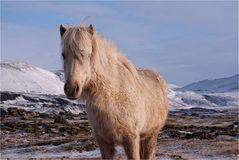 Nur ein Pferd...