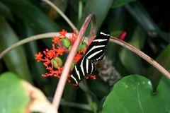 Nur ein Schmetterling