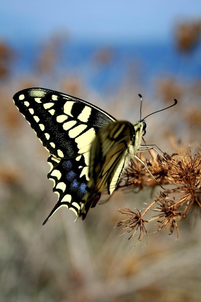 Nur ein Schmetterlingsbild ;-)