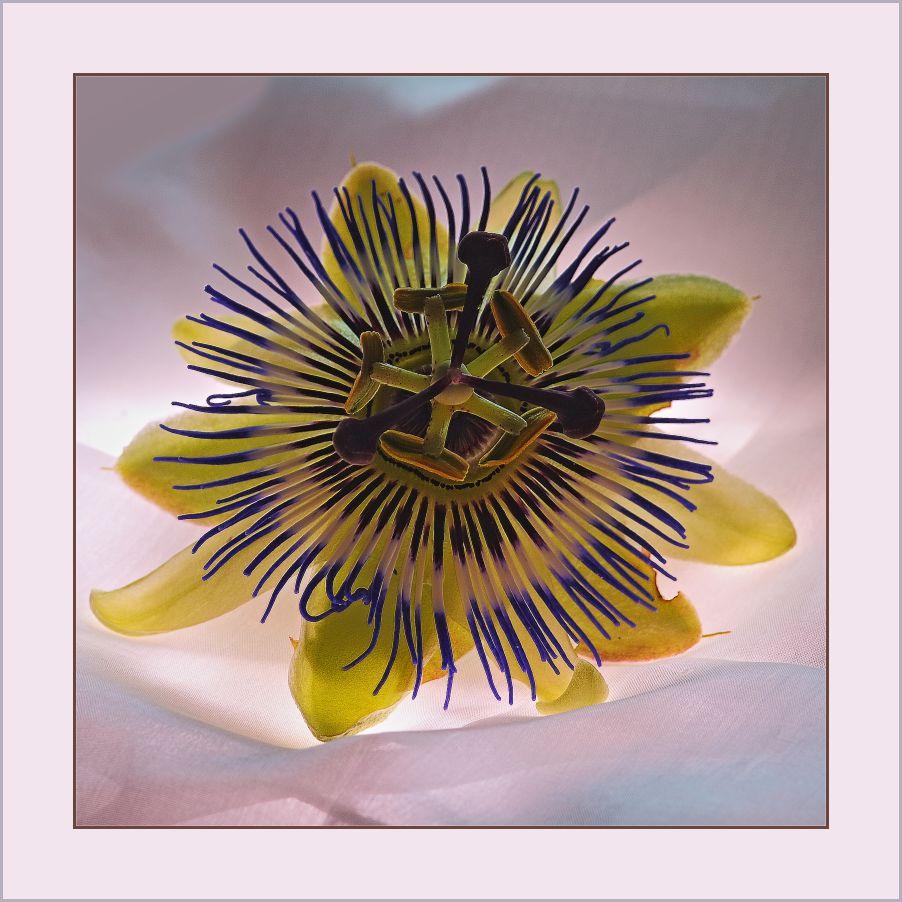 """......"""" Nur eine Blüte.........""""!"""
