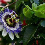 Nur eine Blüte...
