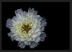 Nur eine Blume ...