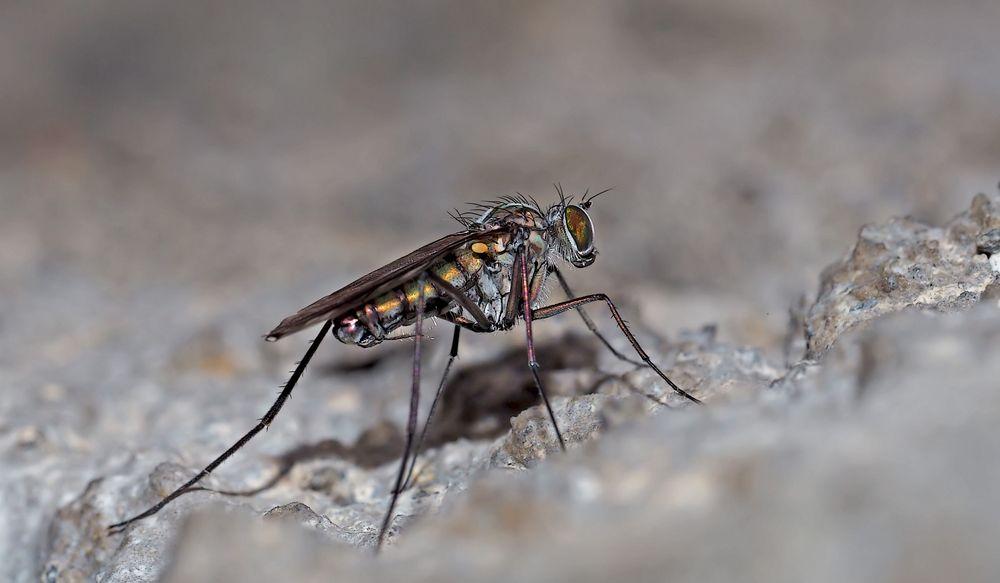 """""""Nur eine Fliege"""", aber schaut sie euch doch einmal näher an... - Ce n'est qu'une mouche, mais..."""