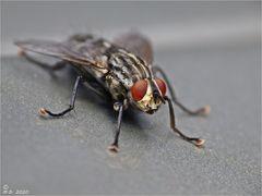 Nur eine Fliege ...