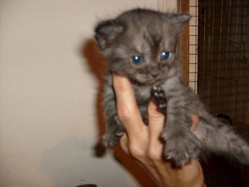 nur eine handvoll katz