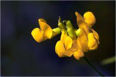 Nur eine kleine, gelbe Blume...