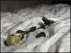 Nur eine Rose ...